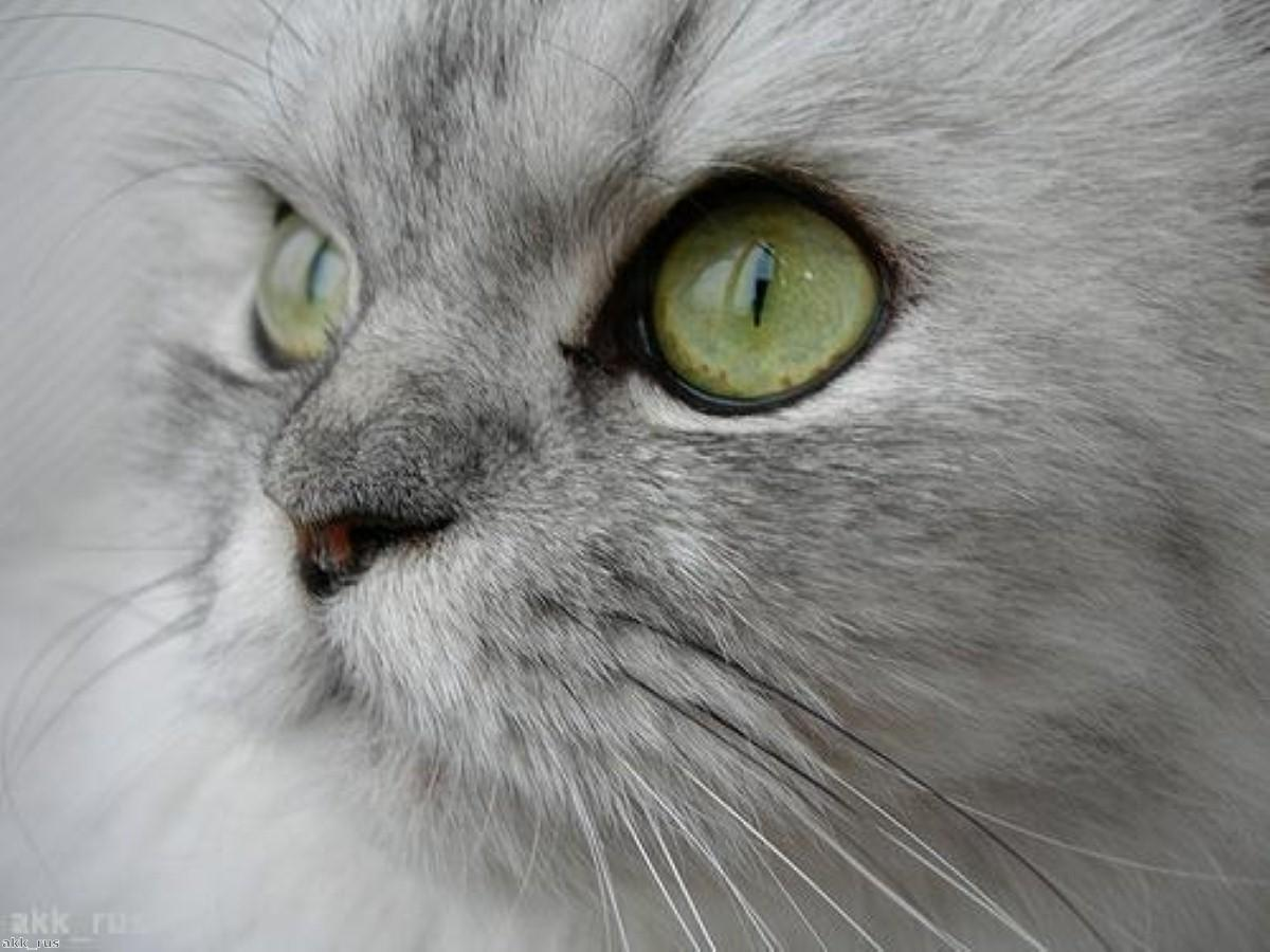 Brits told to beware of dementia cat parasite